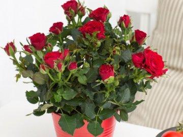 Дизайнерские идеи использования розы в украшении интерьера