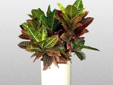 Знакомство с растением