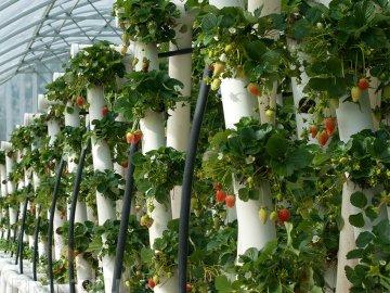Вертикальные гряды для клубники