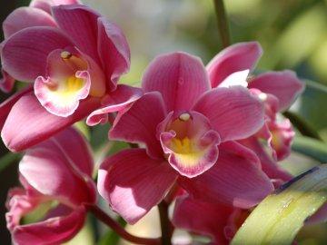Орхидеи: общие сведения