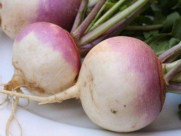Описание овоща