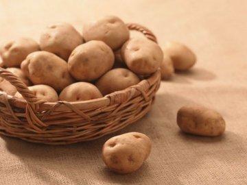 Самые эффективные методы борьбы с вредителями картофеля