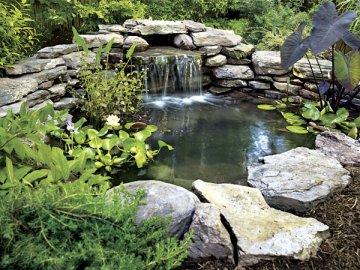 История и традиции создания декоративных прудов