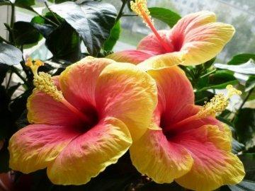 Общий вид растения и его свойства