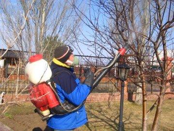 Время проведения обработки деревьев