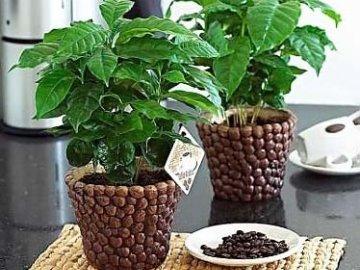 Уход в домашних условиях за растениями 960