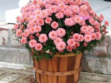 Что нужно для цветов из шариков