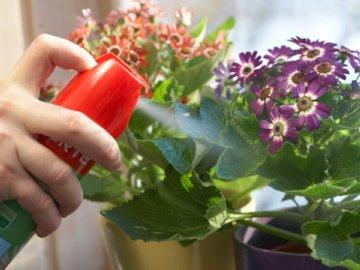 Борьба с вредителями комнатных растений