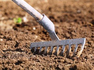 Выбор места для посадки картофеля