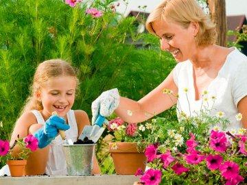 Правила оформления цветочных клумб на даче