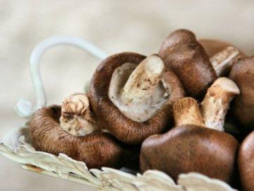Какие грибы можно выращивать в домашних условиях