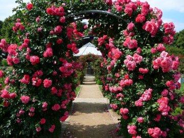 Арки для роз: преимущества