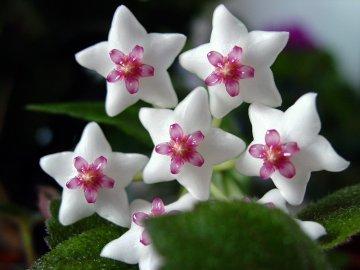 Виды и описание цветка