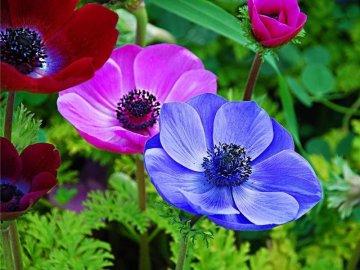 Садовые цветы-многолетники
