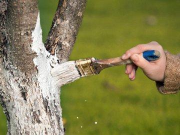 Для чего белят стволы деревьев