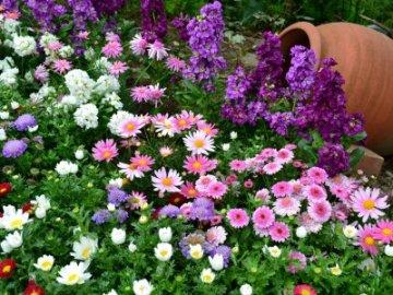 Многолетние цветы цветущие все лето фото и хорошо зимующие