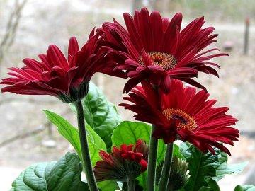 Как создать оптимальные условия для выращивания