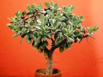 Денежное дерево растет только вверх: почему и что делать