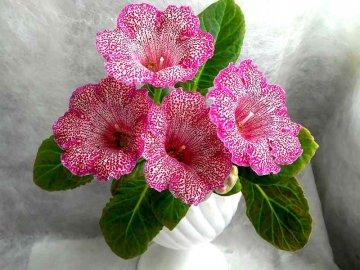 Описание и виды цветка