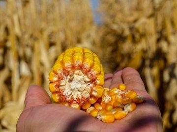 Сбор урожая и способы его хранения