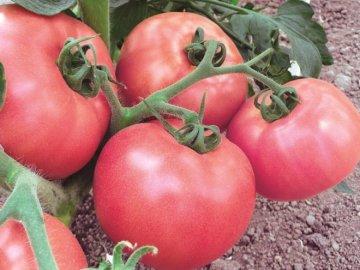Характерные особенности томата