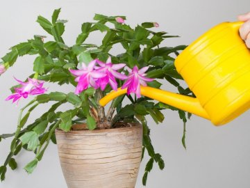 Как правильно ухаживать за растением?