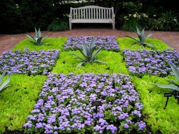 Использование агератума мексиканского в саду