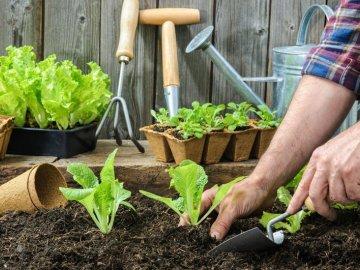 Биодинамическое земледелие