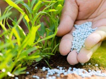 Общая информация о подкормках растений