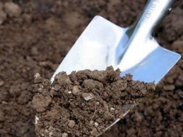 Подготовка почвы, сроки и правила посадки