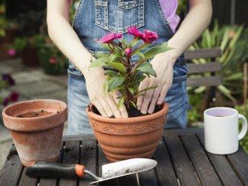Благоприятные дни пересадки цветов весной (март, апрель, май)