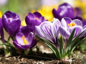 Внешний вид и период цветения