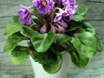 Можно ли пересаживать сенполию во время цветения?