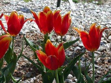 Внешний вид цветка и его особенности