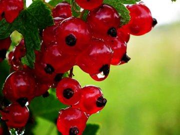 Общее описание красной смородины