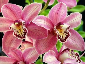 История орхидеи