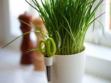 Выращивания лука дома