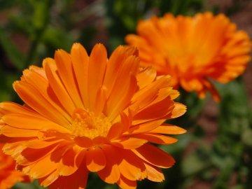 Домашние лечебные растения