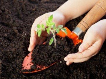 Участок и почва для посадки