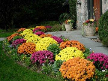 Какие цветы лучше всего выбрать?