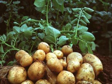Особенности и преимущества гербицидов