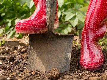 Что посадить в огороде