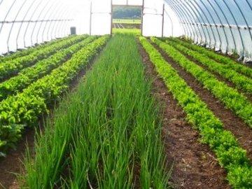 Преимущества выращивания зелени в теплице