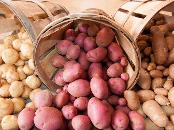 Общая классификация сортов картофеля