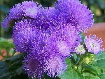 Особенности внешнего вида цветка