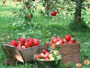 Виды и описание лучших сортов яблонь для выращивания