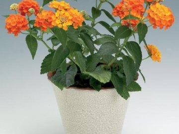 Описание тропического растения
