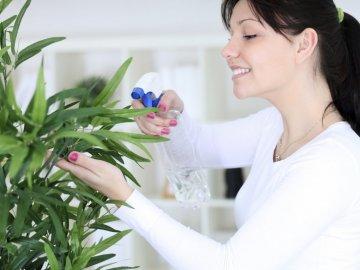 Тля на комнатных растения
