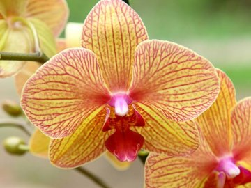 Советы по выбору и уходу за орхидеей