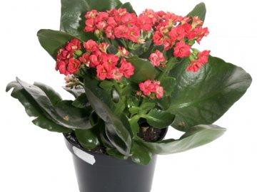 Как правильно выбрать растение при покупке